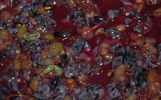 Чача – самогон из винограда изабелла в домашних условиях