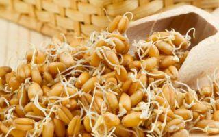 Как прорастить пшеницу и сделать брагу для самогона