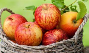 Простые рецепты вкусного яблочного самогона в домашних условиях