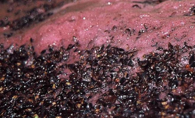 Шапка из мезги винограда
